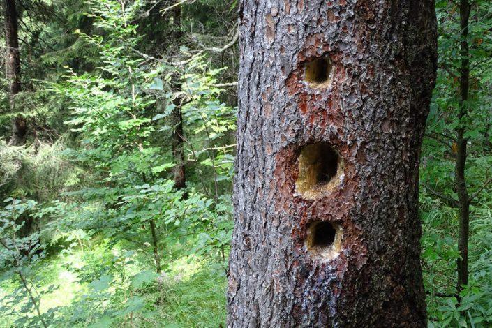 Umweltjournalismus: Spechte im Nationalpark